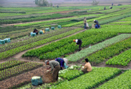 Open a Company in Agriculture in Thailand Image