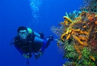 Open a Diving School in Thailand Image