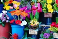 Set Up a Company for Selling Flowers in Thailand Image